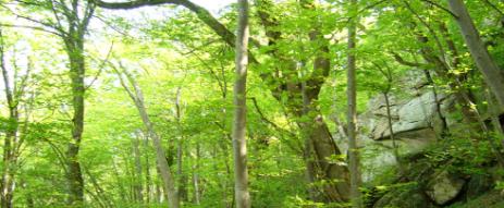 forêt de combronde